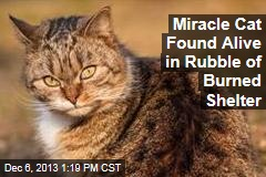 Miracle Cat Found Alive in Rubble of Burned Shelter