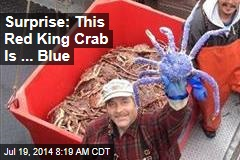 Surprise: This Red King Crab Is ... Blue