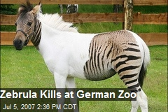 Zebrula Kills at German Zoo